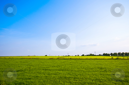 Bright green meadow  stock photo, Bright green spring meadow with blue sky by Karin Claus