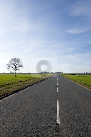 Tree and long road stock photo, Single tree over looking a long road that stretches out almost to the vanishing point by Peter Cox