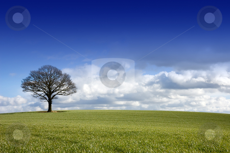 Single tree in a field stock photo, Winter rural English landscape of a single tree under a dramatic blue sky with approaching clouds on the horizon by Peter Cox
