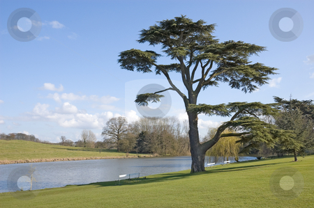 Church Pool Staunton Harold stock photo, Fine Cedar Of Lebanon tree stands beside a ornamental pool on a sunny spring day by Peter Cox
