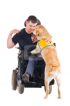 Guide Dog stock photo, Labrador guide dog picked up his owner's keys from the ground and hands them to him. by Tommy Maenhout