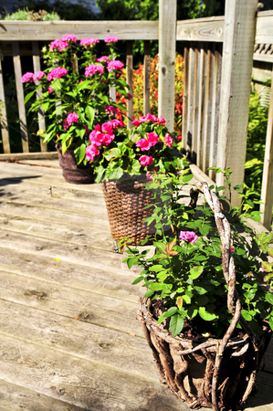 Flower pots on house deck stock photo, Wooden house deck decorated with flower pots by Elena Elisseeva