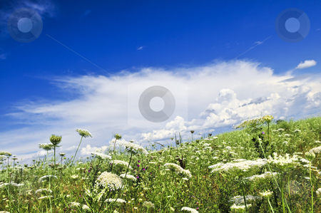 Summer meadow stock photo, Summer meadow with wildflowers and blue sky by Elena Elisseeva