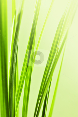 Green grass background stock photo, Natural background with green grass blades close up by Elena Elisseeva