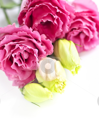 Isolated pink flowers stock photo, Bouquet of flowers called prairie rose isolated on white background by Elena Elisseeva
