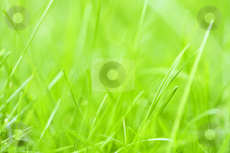 Green grass background stock photo, Natural background of green grass blades close up by Elena Elisseeva
