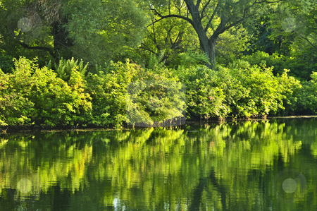 Green reflections in water stock photo, Reflection of green trees in calm water by Elena Elisseeva