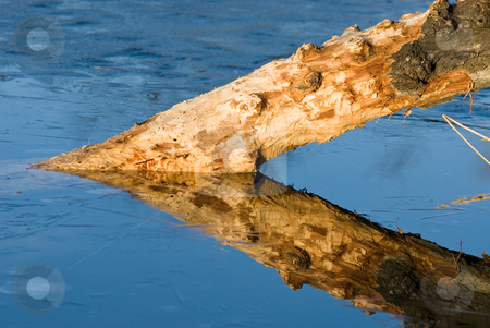 Triangle reflection stock photo, A stump in a frozen lake creating an acute triangle with its reflection lit by the wonderful light of the eveningsun by Alexander L?