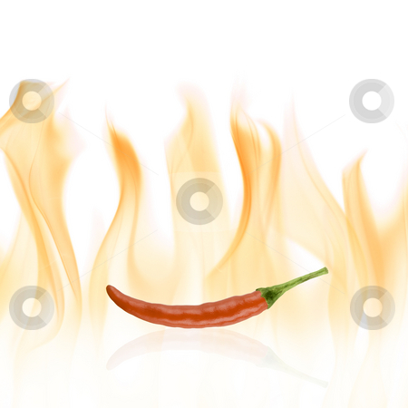 Red chilli pepper stock photo, Red chilli pepper with reflection and fire background by Tommy Maenhout