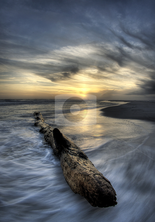 Serendipity stock photo, Waves buffet a large beached log on the gulf coast of Florida. by A Cotton Photo