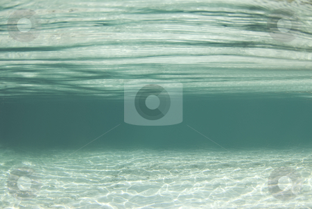 Crystal River Waterscape stock photo, Waterscape background from the crystal clear waters of Crystal River, Florida by A Cotton Photo