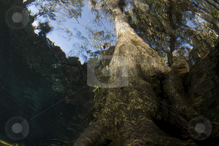 Underwater Tree Above stock photo, The abstract view of a tree from underwater as the action on the surface shimmers and bends the tree above by A Cotton Photo