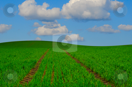 Farming Landscape stock photo, Green field landscape with blue sky by Magnus Johansson