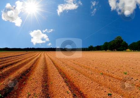 Potato field stock photo, Agriculture land and bright shining sun by Magnus Johansson
