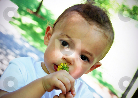 Little Boy stock photo, Adorable little boy smelling a flower on a sunny summer day. by Orange Line Media