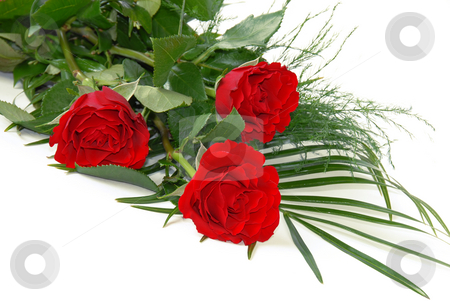 Red roses stock photo, Three bright red roses over white background by Julija Sapic