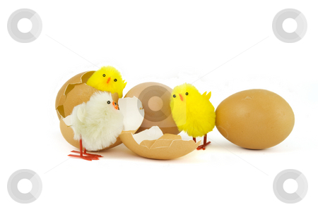 Three Easter chicks stock photo, Three Easter chicks and three eggs with white background by Gert-Jan Kappert