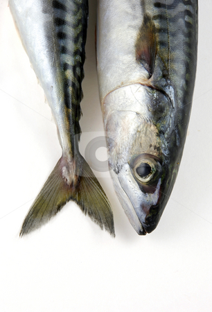 Heads or tails stock photo, The head and tail of a mackerel by Paul Turner