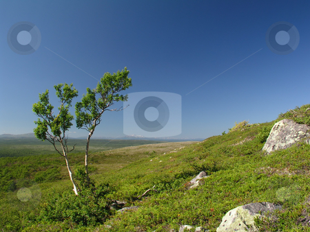 A Tree And The Blue Sky  stock photo, A Tree And The Blue Sky by Ingvar Bjork