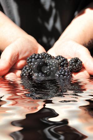 Hands Holding Blackberries stock photo, Reflection of two hands holdhing wet blackberries in water by Lynn Bendickson