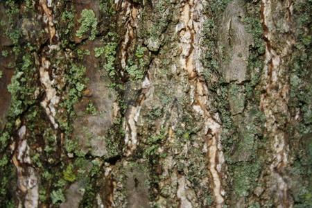 Tree Bark stock photo,  by Chris Torres