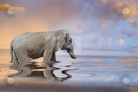 Aquatic world stock photo, Illustration : elephant in an aquatic world by Serge VILLA