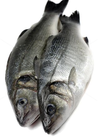 Two sea bass stock photo, Two fresh sea bass by Paul Turner