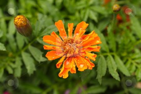 Color flowers  stock photo, Flowers by Rodrigo Reyes Marin