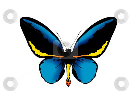 Butterflies stock photo, Butterflies by Luca Bertolli