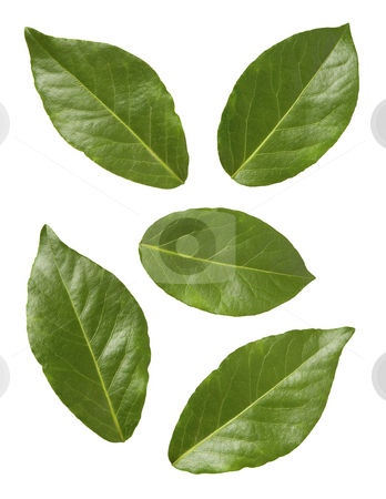 Bay Leaves stock photo, Bay Leaves isolated on a white background by Danny Smythe