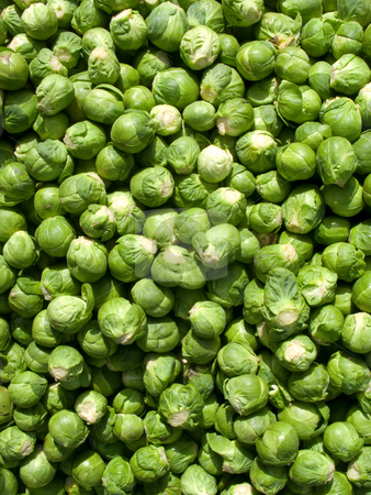 Lots of Brussel sprout vegetables. stock photo, Lots of Brussel sprout vegetables. by Stephen Rees