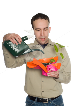 Man Watering Plant stock photo, A young man watering a plant, isolated against a white background by Richard Nelson
