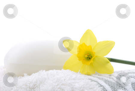 Daffodil with soap stock photo, Daffodil with soap on a terry cloth towel by John Teeter