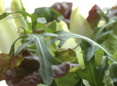 Salad choice stock photo, Salad choice by Ewa Kubicka