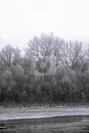 Winter landscape stock photo, Black winter trees on riverbank scenic landscape by Julija Sapic