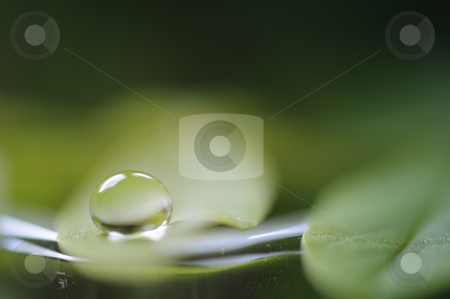 Fresh stock photo, Drop on green leaf. by Angelique Brunas