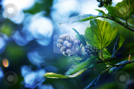 Nature stock photo, Nature. by Angelique Brunas