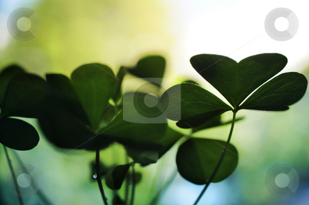 Clover stock photo,  by Angelique Brunas