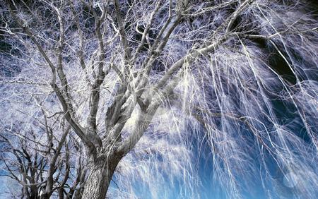 Infrared Landscape stock photo, Landscape scene shot with an infrared filter by Vlad Podkhlebnik