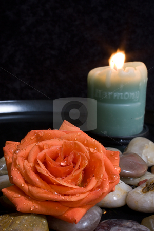 Harmony  stock photo, Still life with a lit Harmony candle and an orange rose with dew drops in a water and stone setting by Terry McClary