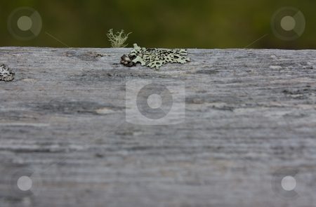 Lichen and Moss stock photo, Lichen and moss on a log by Terry McClary