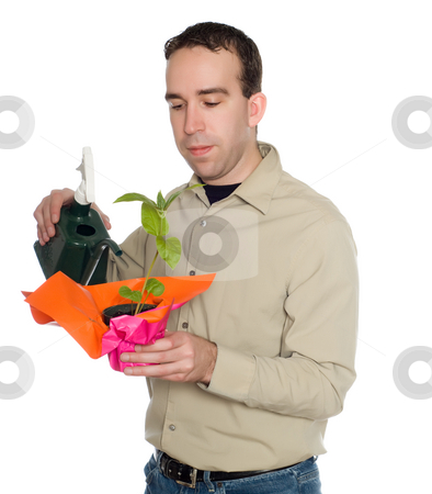 Man Watering Plant stock photo, A young man watering a potted plant, isolated against a white background by Richard Nelson