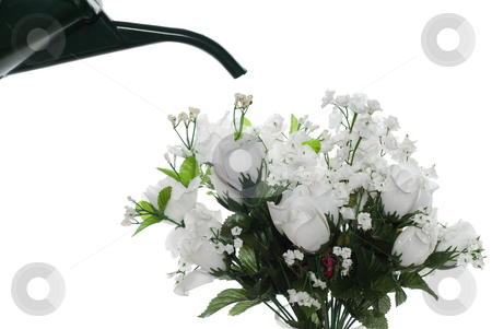 Watering Fake Roses stock photo, Concept image of a watering can about to pour water over some artificial roses by Richard Nelson