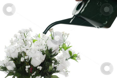 Watering Artificial Roses stock photo, Closeup view of a watering can about to water some artificial roses, isolated against a white background by Richard Nelson