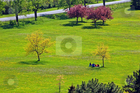 Park stock photo, Landscape - People and lonely tree on the field with small flowers by Pavel Cheiko