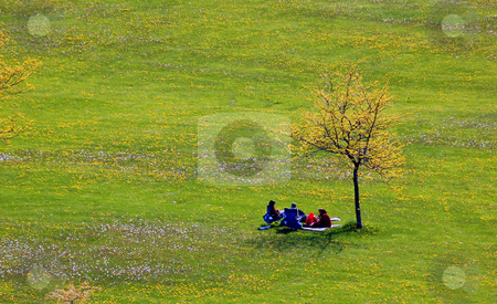 Relaxation stock photo, Landscape - People and lonely tree on the field with small flowers by Pavel Cheiko