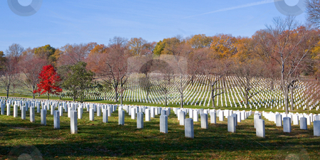 Arlington National Cemetery stock photo, Stunning panoramic image of Arlington National Cemetery with a gorgeous red tree to accent by Maria OBrien