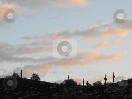 Saguaro morning light stock photo, Pink tinted clouds on a light blue morning sky provide background to Saguaro Cactus silhouetted on a desert, mountain, ridgeline in Arizona.  The Saguaro Castus flower is the Arizona state flower. by Dennis Thomsen