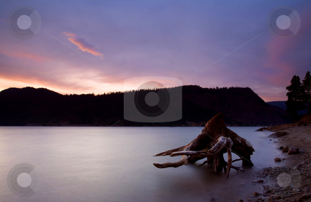 Left on the Shore stock photo, A grarled stump  left on the shores of Rimrock Lake by Mike Dawson