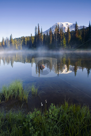 Rainier Mist stock photo, A lone wildflower dots the shore of an alpine lake as early morning light illuminates Mt. Rainier by Mike Dawson